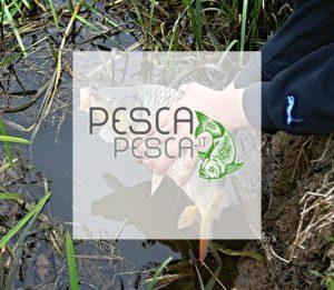 Pescapesca.it
