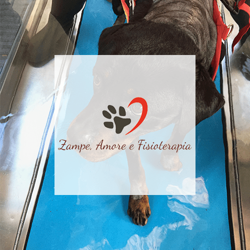 zampe-amore-fisioterapia